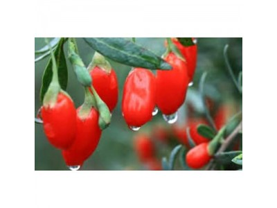 Premium Goji Berry 100 g - from Japan