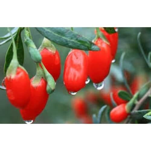 Buy Goji Berry 100g Premium Product From Japan Online At Sale